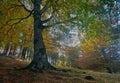 Bosque en otoño Stock Images