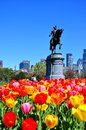 Boston city from tulips garden taken in public usa Royalty Free Stock Photography