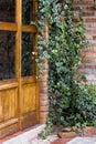 Boston ivy crawling up brick wall buiten rustieke deur Royalty-vrije Stock Afbeelding