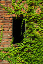 Boston ivy masonry house overgrown rambling plant Royalty Free Stock Photos