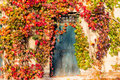 Boston ivy and old door Royalty Free Stock Photo
