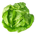 Boston Lettuce Stock Photography