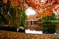 Boston Public Garden Royalty Free Stock Photo
