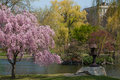 Boston spring park scene with trees water Stock Photos