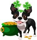 Boston terrier celebrates saint patrick day illustration of cute Royalty Free Stock Images