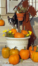 Boston Terrier and pumpkins Royalty Free Stock Photos