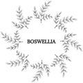 Boswellia, round frame 2