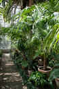 Botanic garden palm conservatory section of cluj napoca Stock Photos