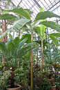 Botanic garden palm conservatory section of cluj napoca Royalty Free Stock Photos