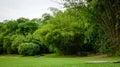 Botanic Gardens in Singapore