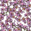 Botanical floral background. Hand drawn wallpaper. Vector illustration. Freehand flowers seamless pattern with wild plants and