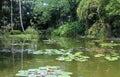Botanical Garden Of Deshaies I...