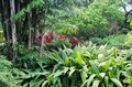 Botanical Garden Of Deshaies I...