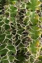 Botanical Garden IV Stock Photos