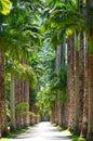 Botanical garden. Rio de Janeiro Stock Photos