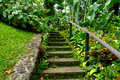 Botanical garden steps cement lead into the green depths of a on the island of saint vincent in the caribbean Stock Photo