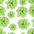 Botanical illustration of succulent rosette plant Echeveria. Seamless pattern clip art on a white