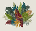 Botanical illustration. Tropical leaves.