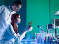 Botanical research side view of biochemists studying a young green plant in a laboratory Stock Photo