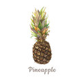Botanical watercolor illustration of tropical fruit pineapple with colorful leaves isolated on white background