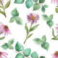 stock image of  Botanical watercolor seamless pattern-lush pink blooming Echinacea flowers with green branches and eucalyptus leaves isolated on w