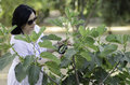 Botanist checking the growth of figs woman on tree with magnifying glass Royalty Free Stock Photo