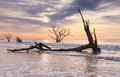 Botany bay boneyard charleston south carolina coast beach is a for trees ravaged by the atlantic ocean on the of near edisto Royalty Free Stock Image