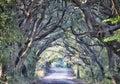 Botany Bay Plantation Spooky Dirt Road Marsh Oak Trees Tunnel wi Royalty Free Stock Photo