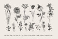 Botany. Set. Vintage flowers. Royalty Free Stock Photo