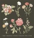 Botany Set vintage realistic isolated flowers Drawing engraving Vector Illustration Apple Agrostemma Carnation Chamomile Rose Royalty Free Stock Photo