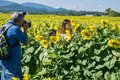 Photographer, Woman and Sunflowers