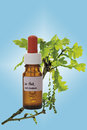 Bottle with Bach Flower Stock Remedy, Oak (Quercus), close-up