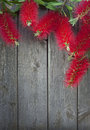 Title: Bottle Brush Flowers Wood Background