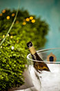 Bottle of champagne in the ice Royalty Free Stock Photo