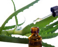 Bottle of essence oil with plant Stock Photography