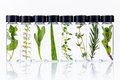 Bottle of essential oil with herb holy basil flowers, rosemary,o Royalty Free Stock Photo