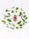 Bottle of essential oil with herb holy basil leaf, rosemary,oreg Royalty Free Stock Photo