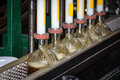 Bottle filling bourbon whiskey bottles on the line getting filled in frankfort kentucky Stock Photo