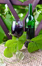 Bottle and glass with red wine in vineyard Royalty Free Stock Image