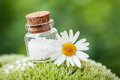 Bottle of homeopathy globules and daisy flower on moss. Royalty Free Stock Photo
