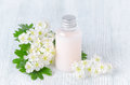 A bottle of organic shower gel with fresh flowers Royalty Free Stock Photo