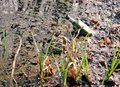 Bottle in the swamp empty polluted water with rubbish growing green grass near Stock Image
