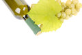 Bottle of wine with glass and green grapes Royalty Free Stock Photography