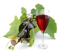 Bottle of wine in the vine on a white background Stock Photo