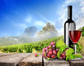 Bottle wine and vineyard with grape on a background of Stock Photos