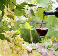 Bottle young wine and ripe grape background Royalty Free Stock Photo