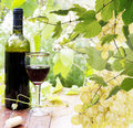 Bottle young wine and ripe grape background Stock Photography