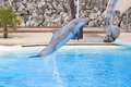 Bottlenose dolphin in the aquarium Stock Image