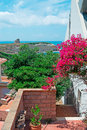Bougainvillea by the coastline flowers and houses shore Stock Image