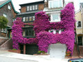 Bougainvillea house being taken over and devoured by the fast growing plant Royalty Free Stock Photography